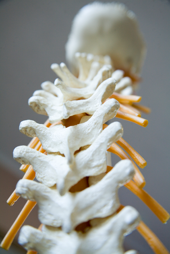 Degenerative disc disease is not as much a disease as it is a name for the changes that can happen to the spine as we age.